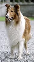 Go Lassie go !